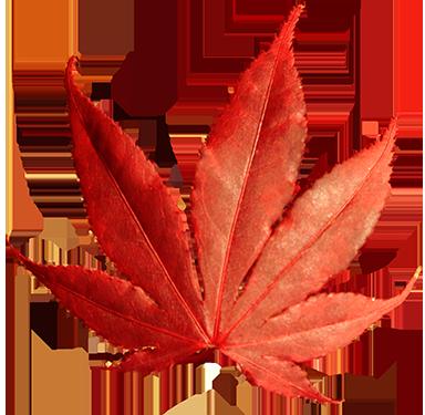 384x375 Fall Leaves Clip Art