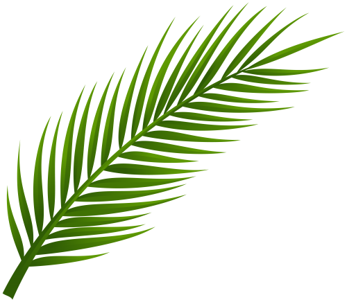 500x436 Palm Tree Leaf Png Clip Art Leaves Only Palm Tree