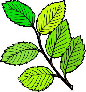 279x300 Summer Leaves Clip Art