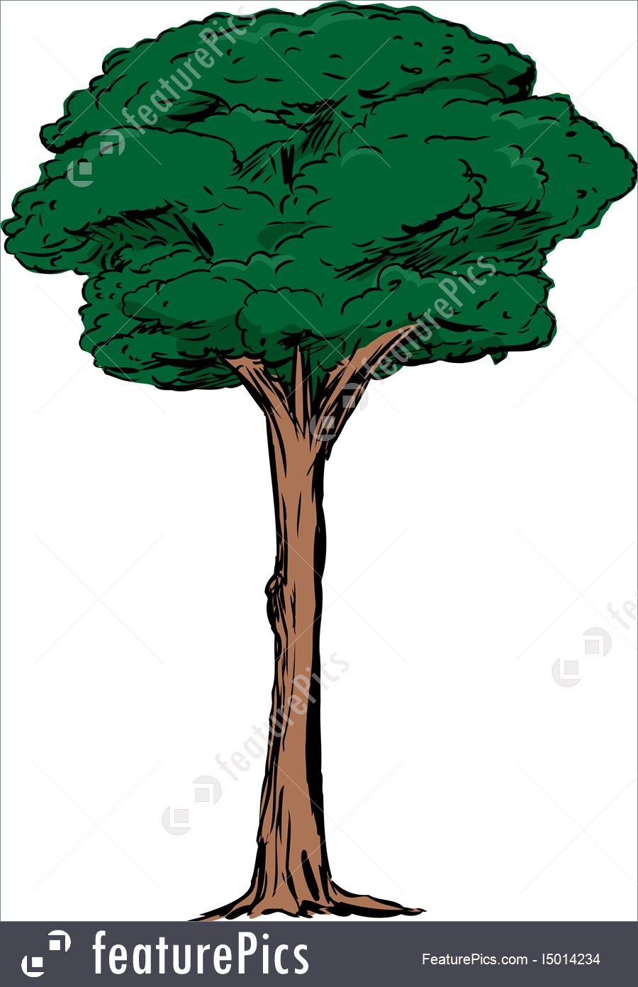 900x1392 Tall Tree Trunk Clip Art