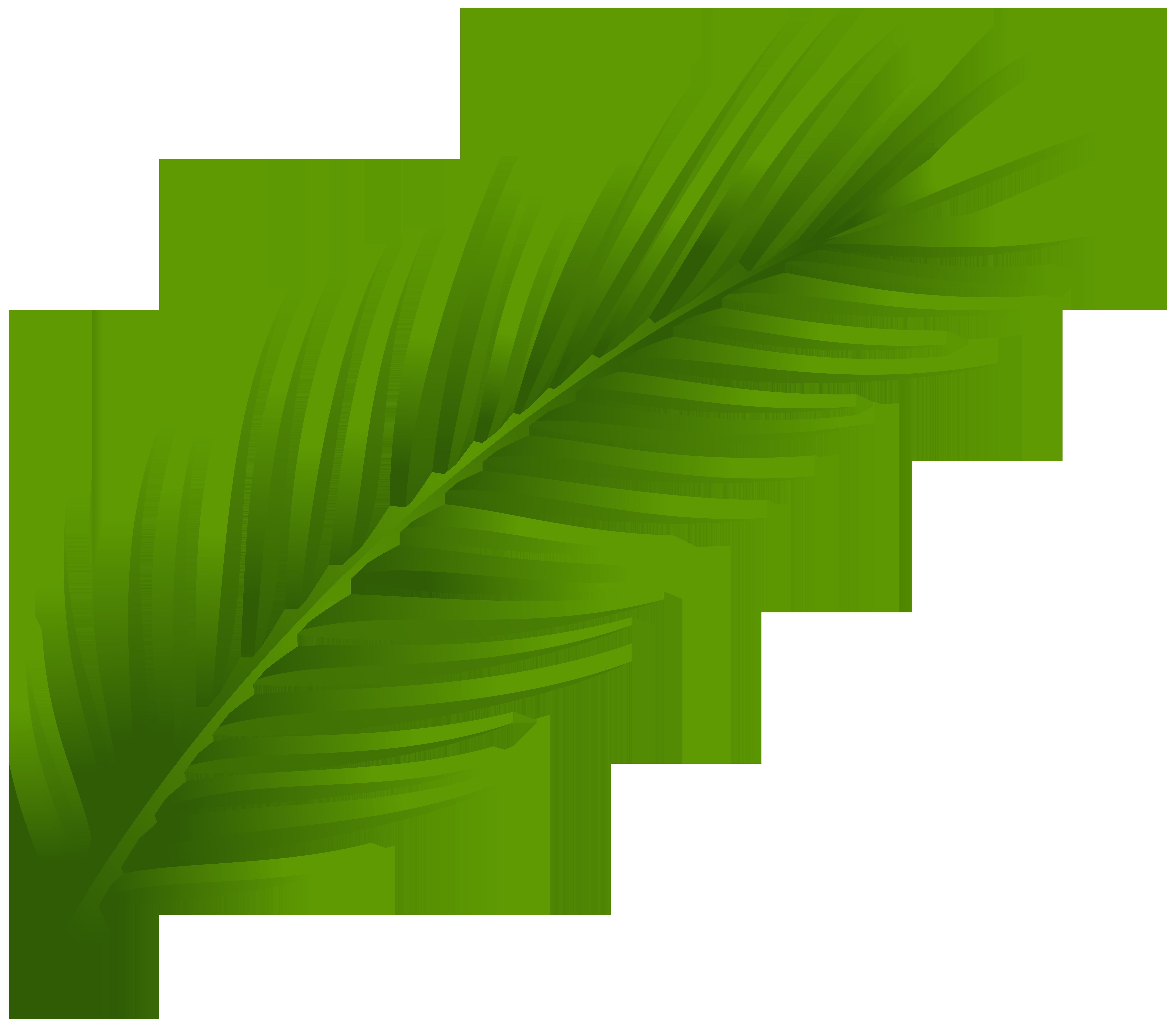 8000x6983 Palm Tree Leaf Png Clip Art