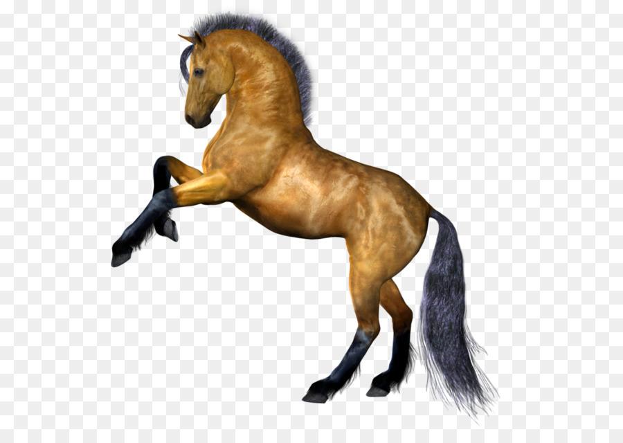 900x640 Horse Stallion Clip Art