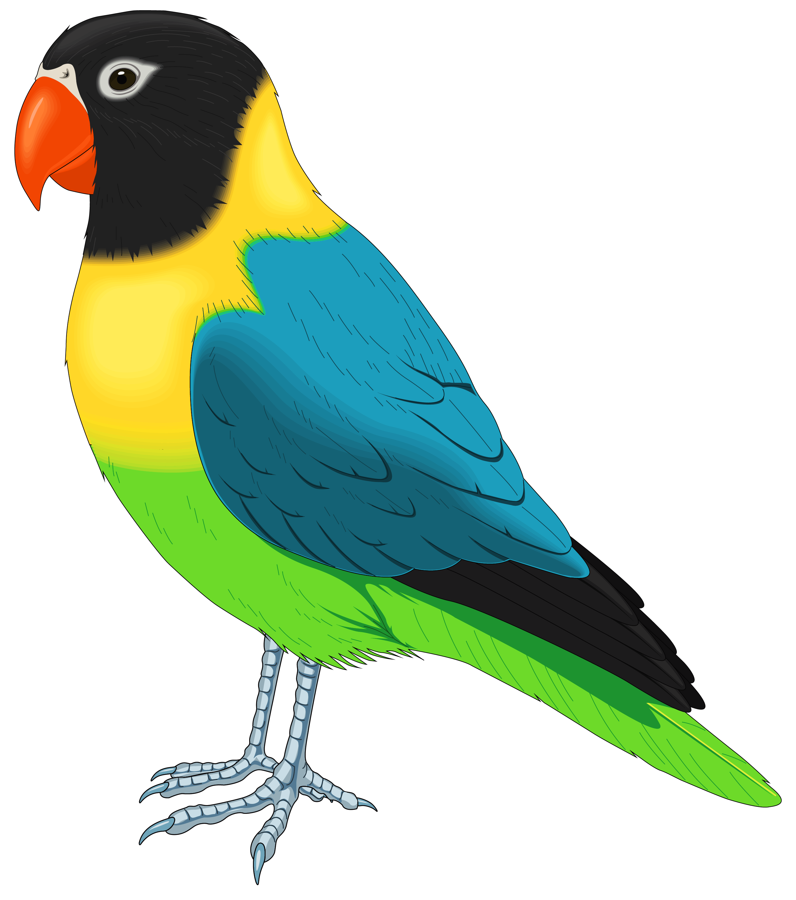 2725x3081 Multicolored Bird Png Clipart