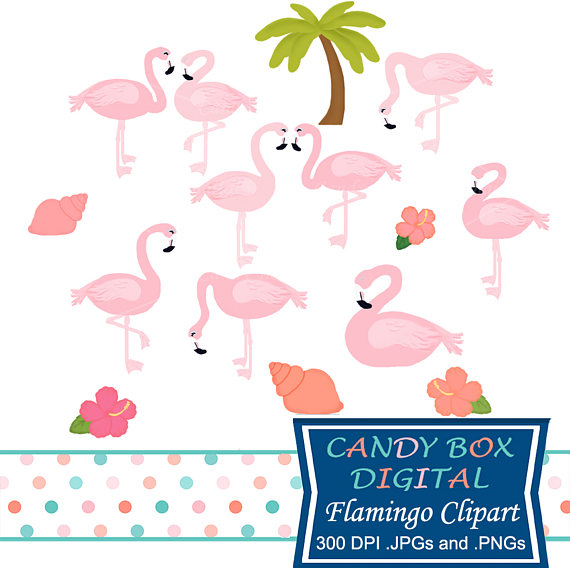 570x570 Pink Flamingo Clipart Tropical Bird Clip Art Commercial Use