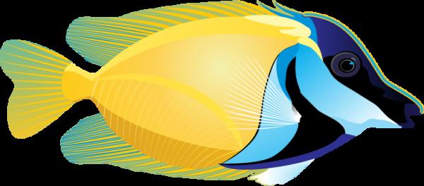 600x264 Tropical Fish Clip Art
