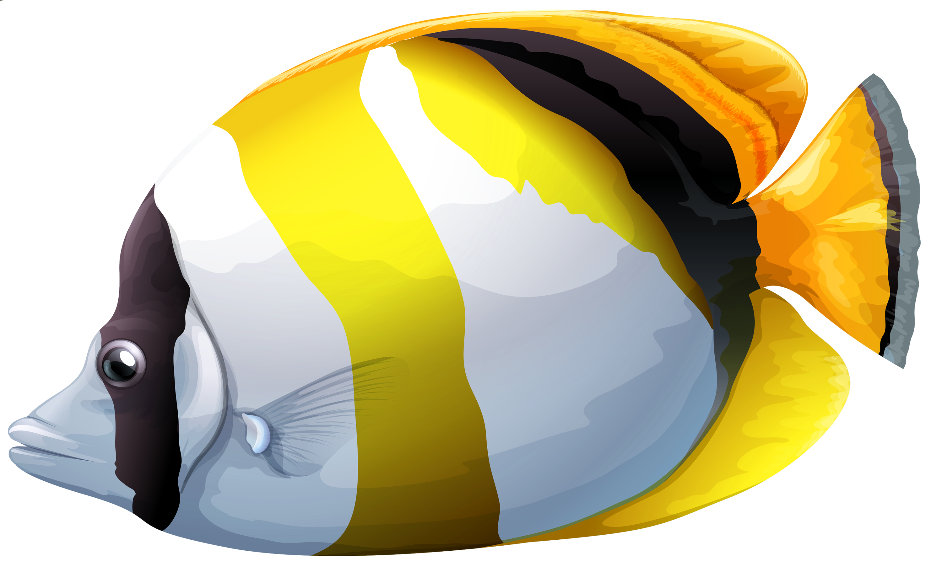 3000x1874 Chaetodon Butterfly Fish Png Clipart