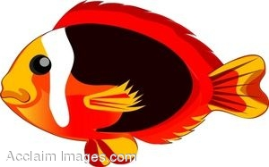 300x187 Clip Art Of A Red And Yellow Tropical Fish