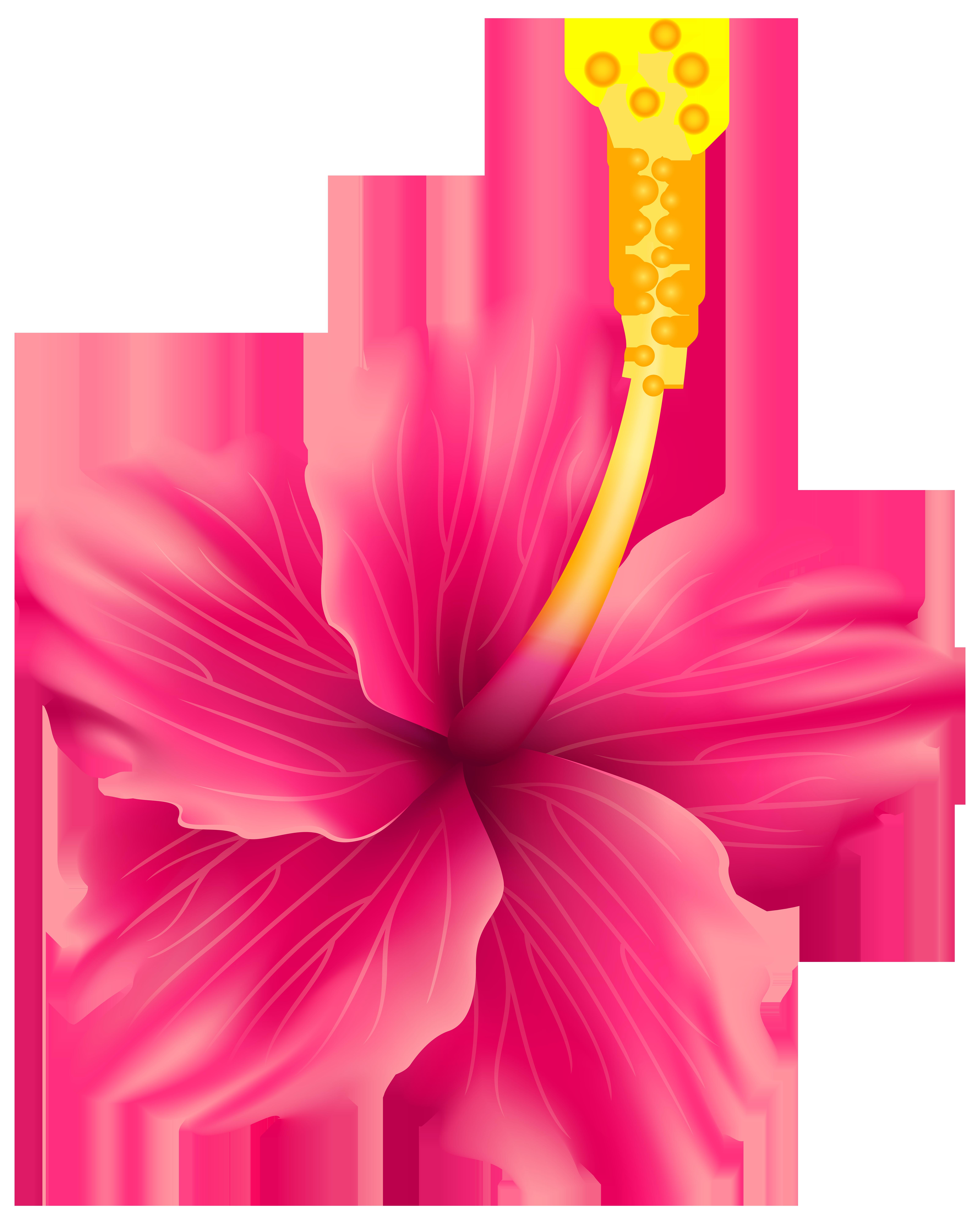 6404x8000 Pink Exotic Flower Png Transparent Clip Art Imageu200b Gallery