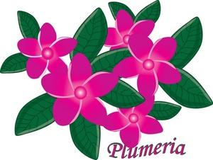300x226 Plumeria Flower Clip Art
