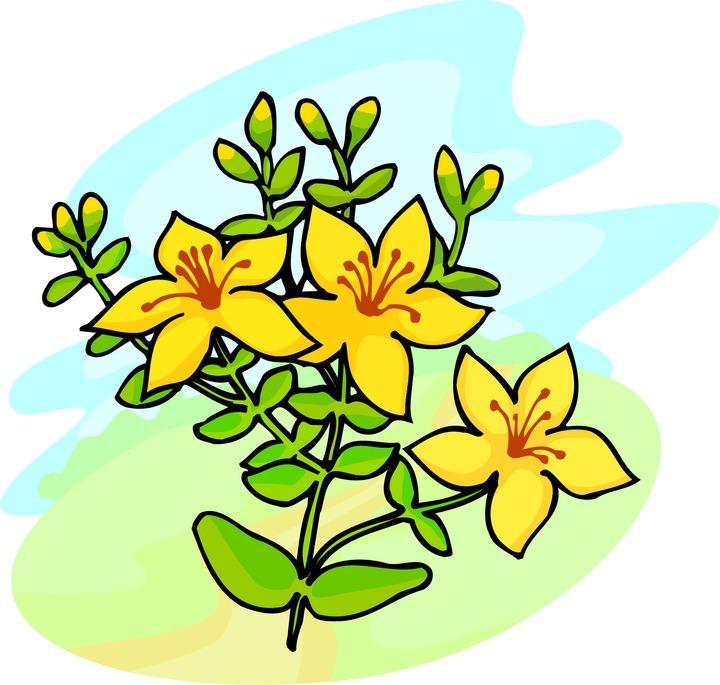 720x685 Tropical Flower Clipart