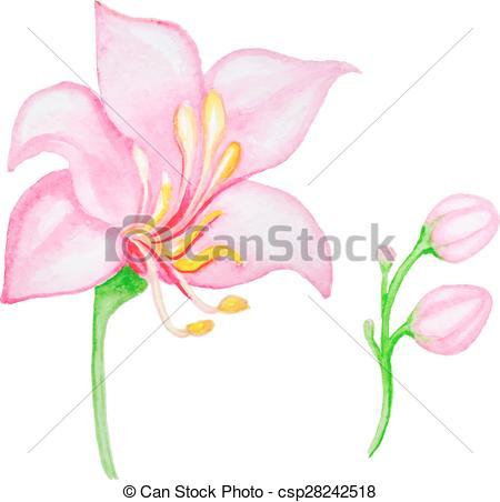 450x452 Watercolor Pink Tropical Flower, Vector Illustration Vector Clip