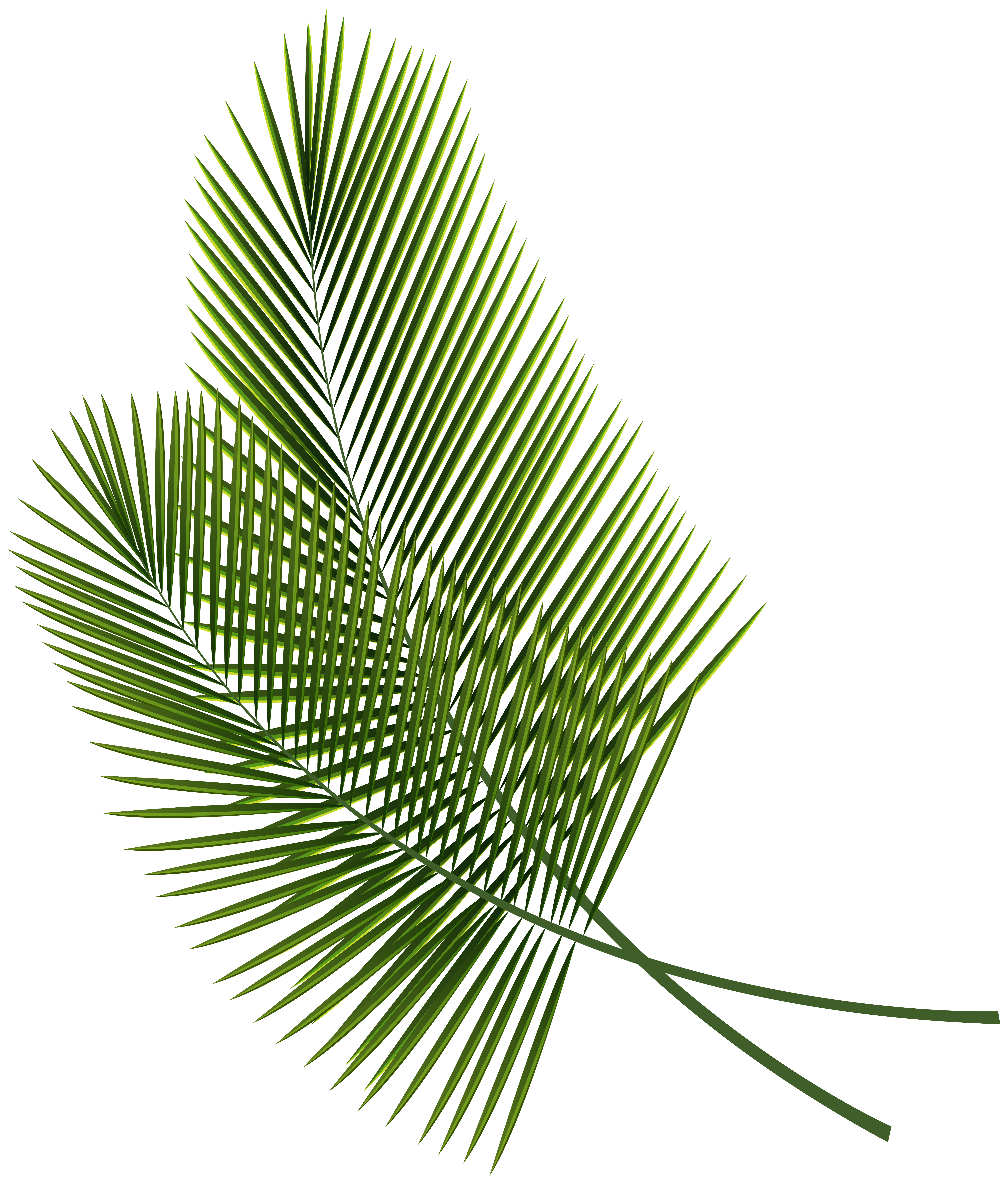 Tropical Leaves Clipart at GetDrawings