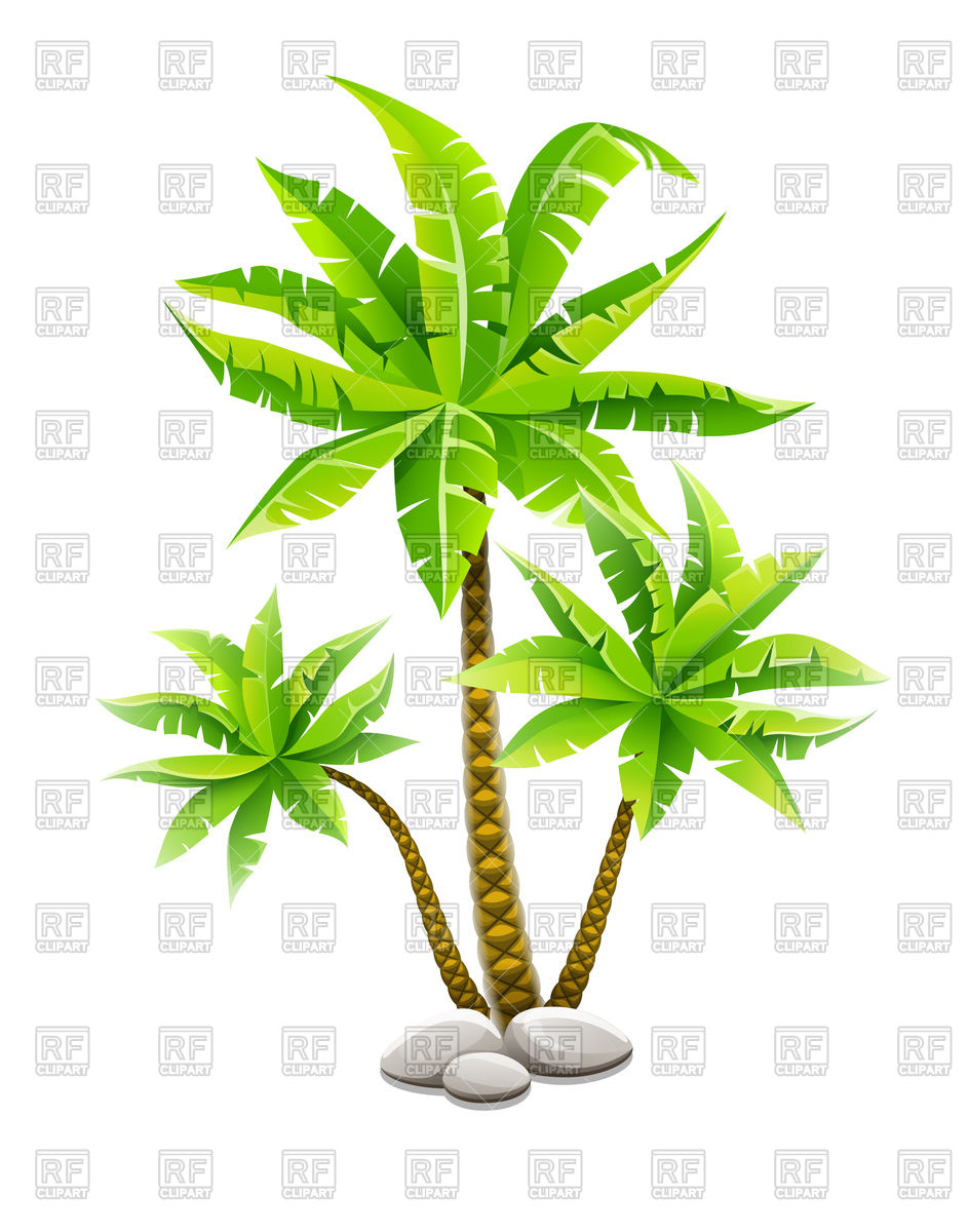 944x1200 Tropical Coconut Palm Trees