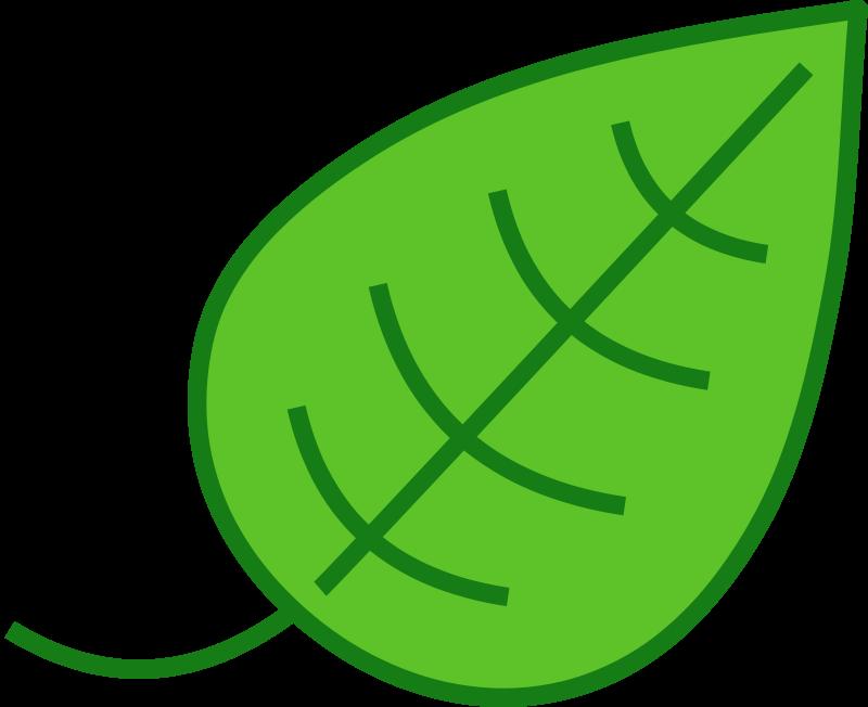800x652 Tropical Leaf Clip Art 2150058