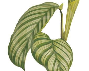 340x270 Vintage Clip Art Palm Leaf Clip Art Clip Art Tropical Leaf