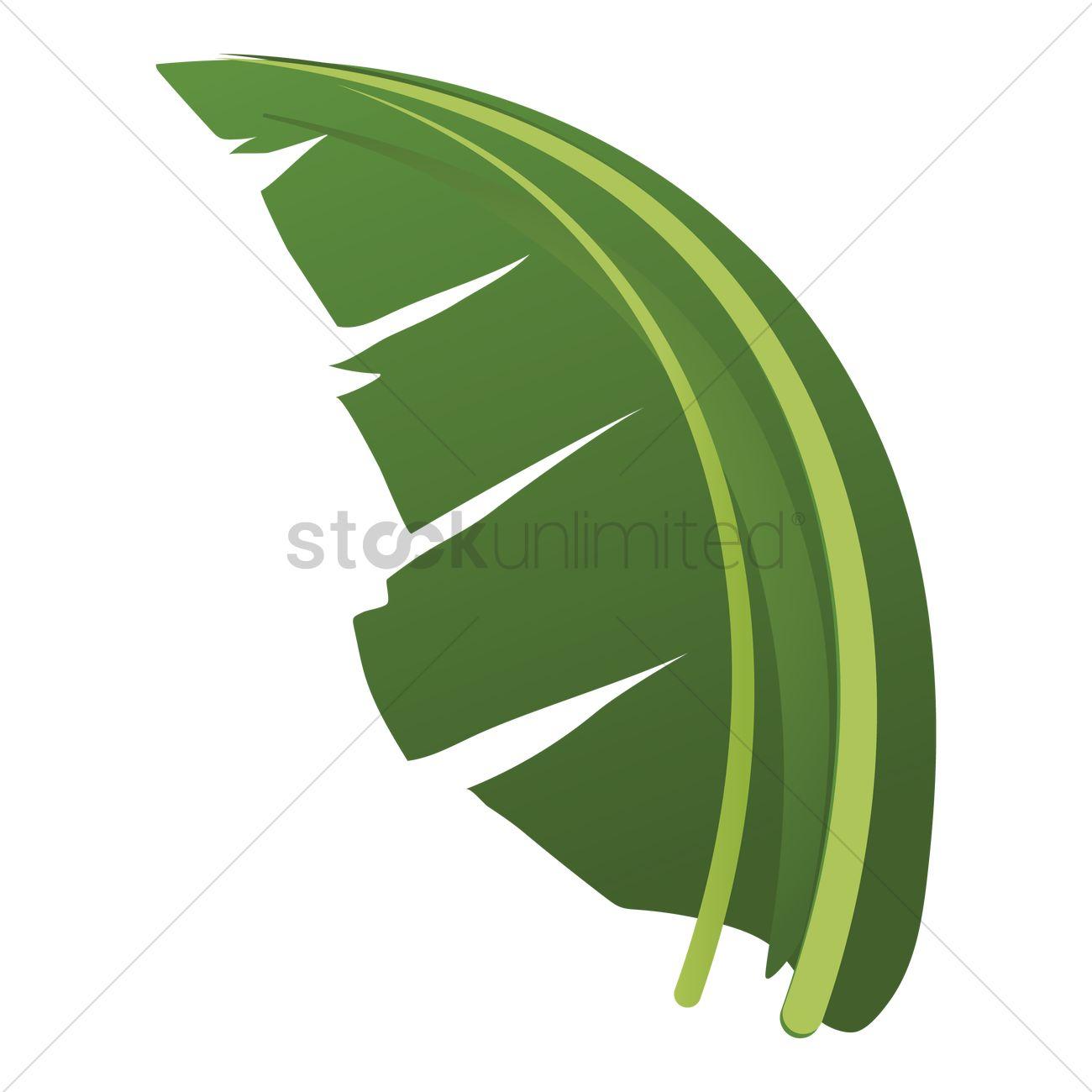 1300x1300 Clip Art Banana Leaves Set Of Palm Decorative Tropical Foliage