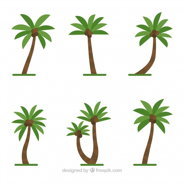 626x626 Coconut Trees Vectors, Photos And Psd Files Free Download