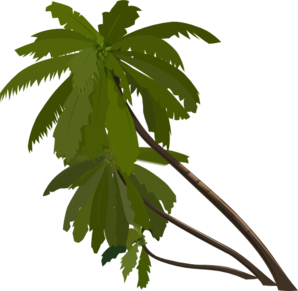 298x291 Collection Of Rainforest Clipart Transparent High Quality