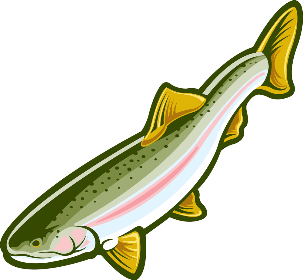 1000x923 Rainbow Trout Clip Art