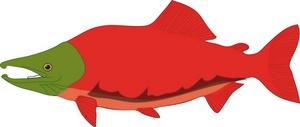 300x127 Salmon Clip Art Amp Salmon Clipart Images