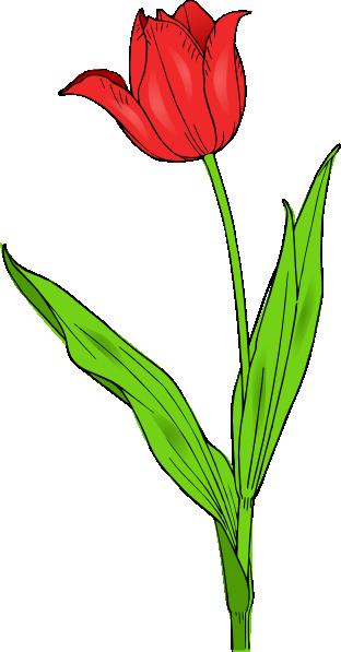 312x597 Red Tulip Clip Art