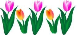 250x114 Spring Clipart Tulip