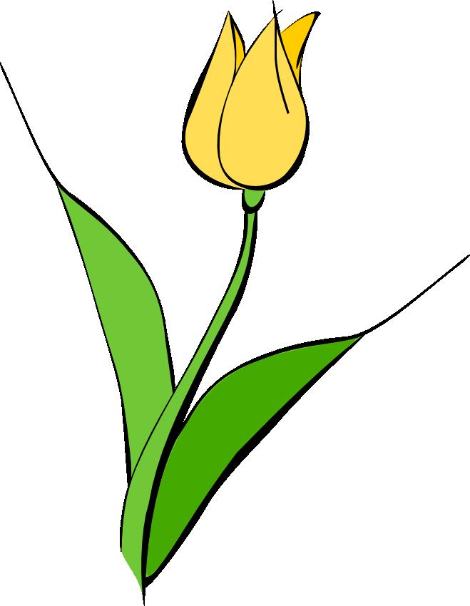 659x850 Free Tulip Flower Clip Art Clipart Panda