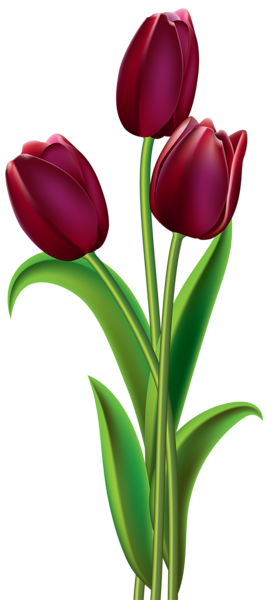 273x600 Red Dark Tulips Png Clipart Image Broderie Clipart