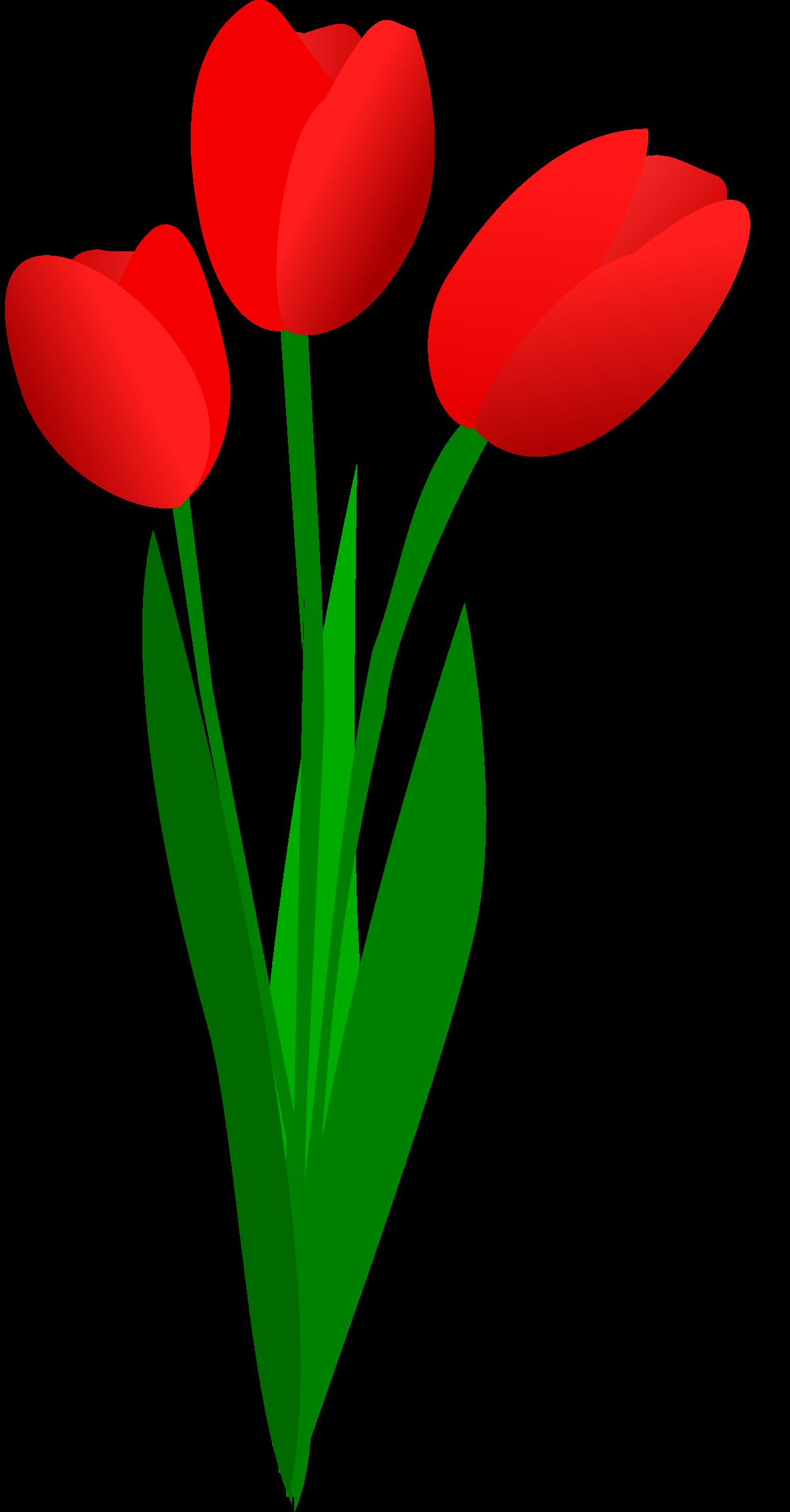 1254x2400 Tulip Flower Clipart