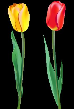 280x412 Tulip Png Image Cliparts Clip Art