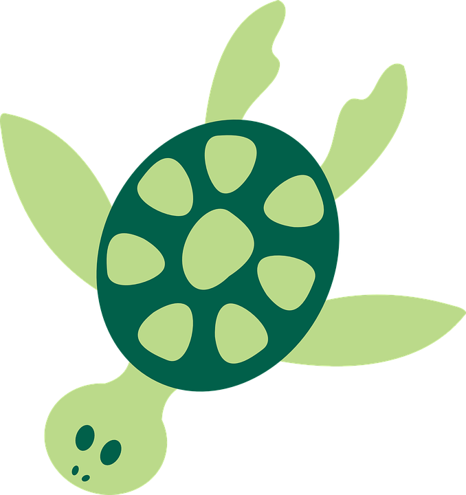 678x720 Sea Turtle Graphic Group