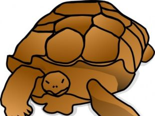 turtle clipart at getdrawings com free for personal use turtle rh getdrawings com turtle clip art free download turtle dove clip art free