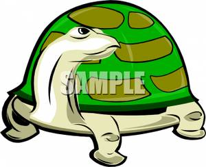 300x244 A Brown Turtle With A Green Shell