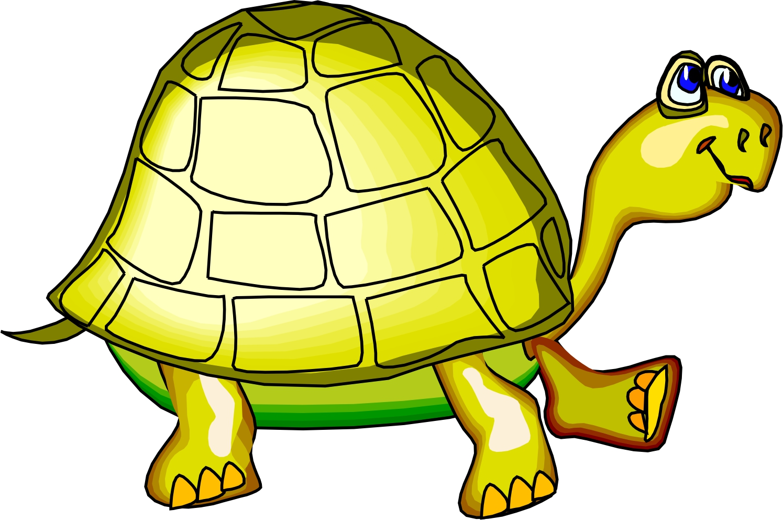 1495x992 Turtle Clip Art Black And White Image