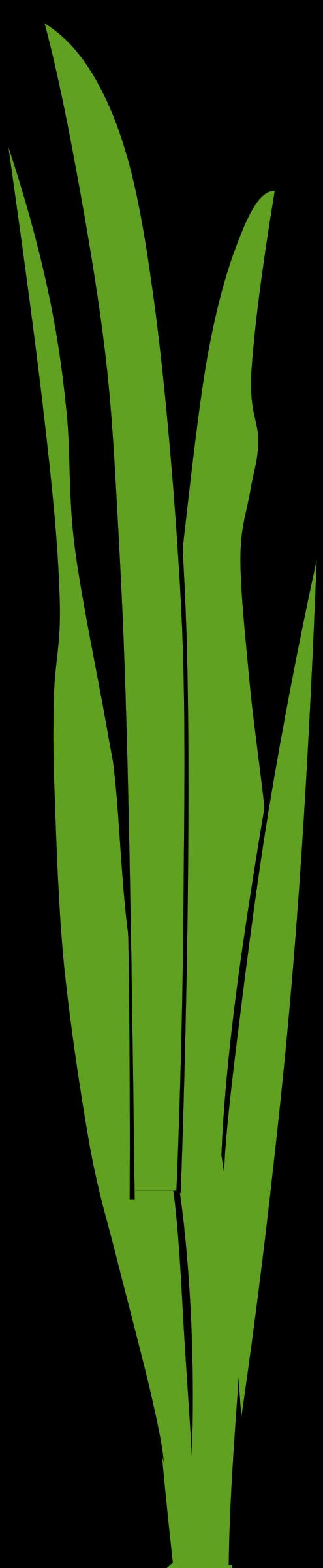 495x2400 Blade Clipart Seagrass