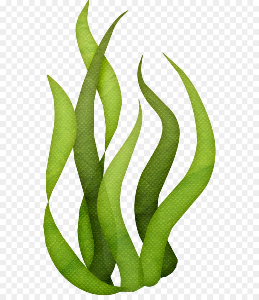 900x1040 Edible Seaweed Drawing Clip Art