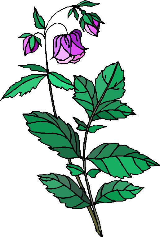 516x762 Plants To Use Free Clip Art