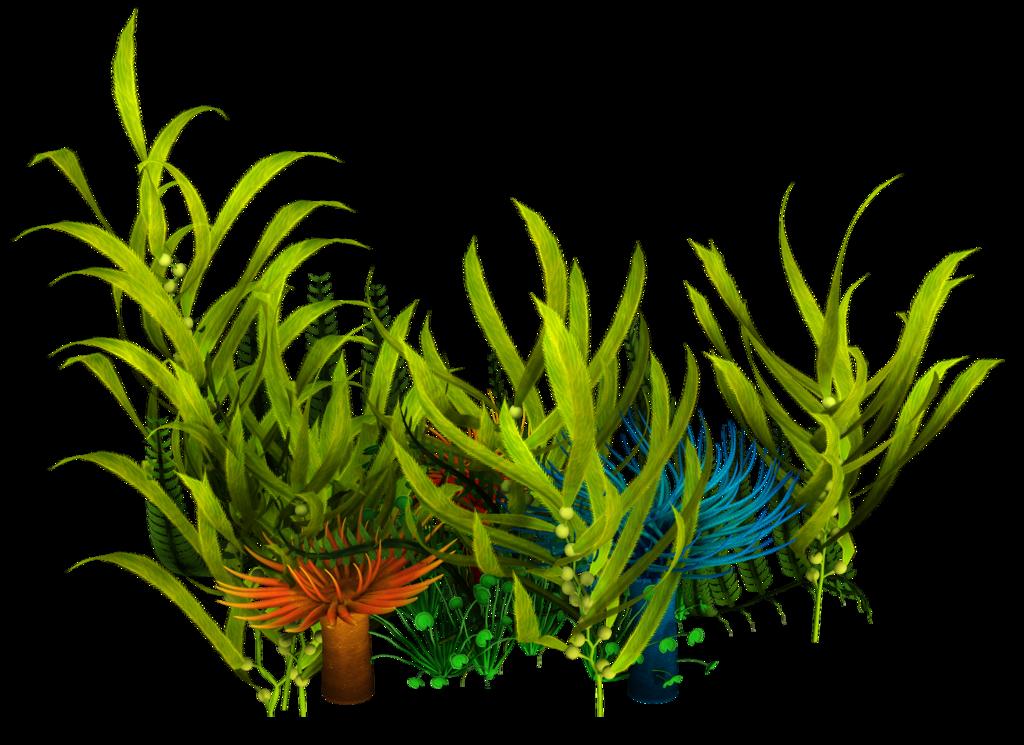1024x745 Underwater Aquatic Plants Seaweed Clip Art
