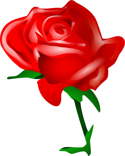480x599 Valentines Day Roses Clip Art High Definition Wallpapers (Hd
