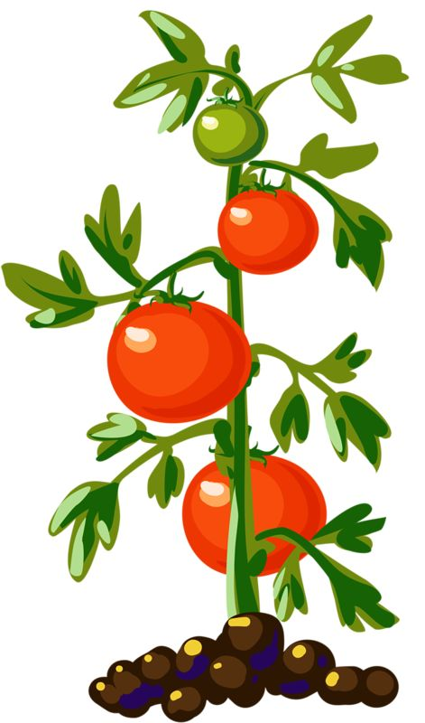 vegetable basket clipart at getdrawings com free for personal use rh getdrawings com