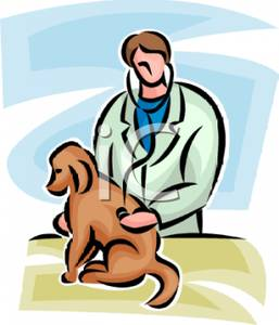 257x300 Clip Art Image A Vet Listening To A Dog's Back With A Stethoscope