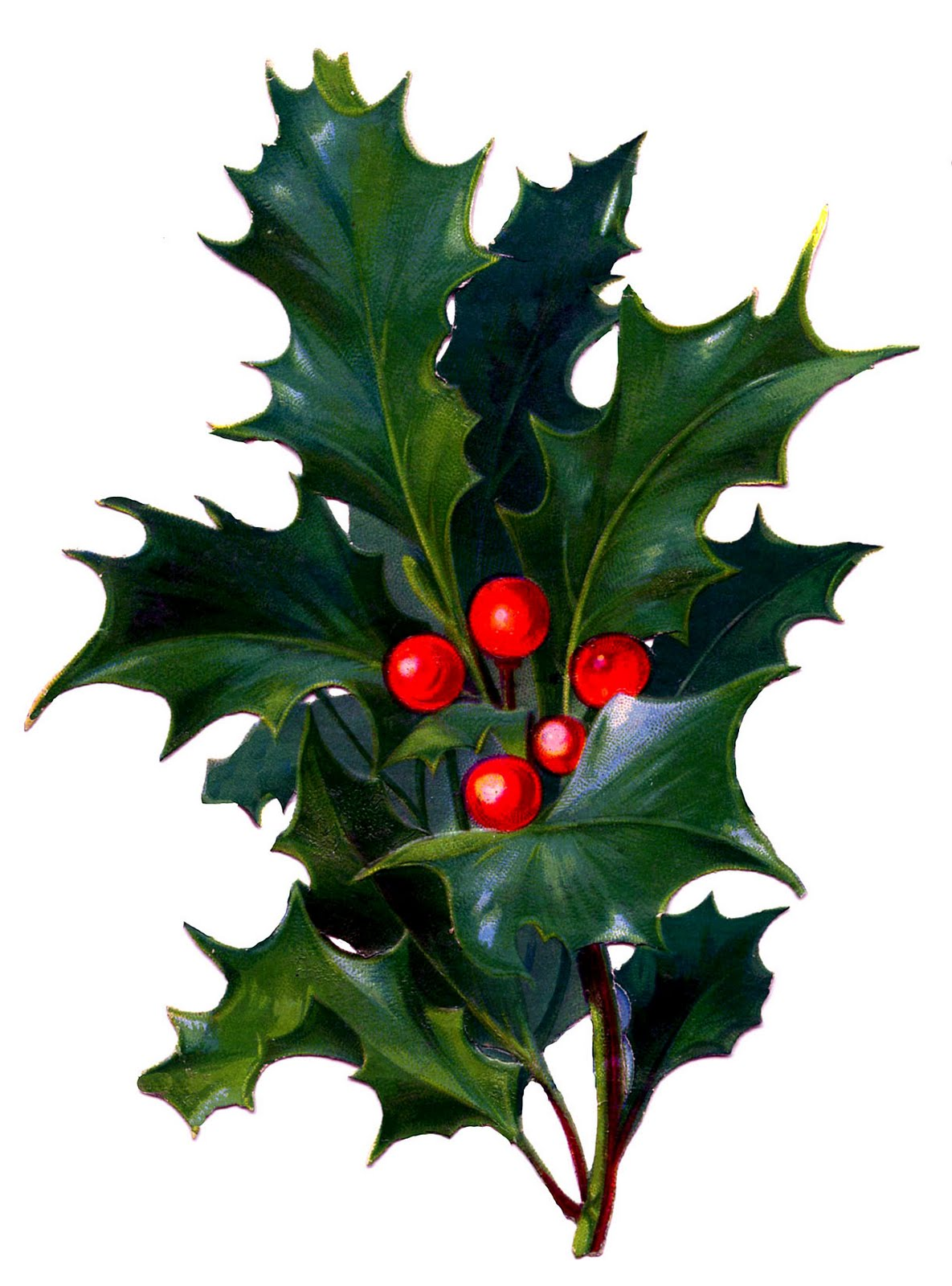 1185x1600 Victorian Christmas Clip Art Holly With Bright Red Berries