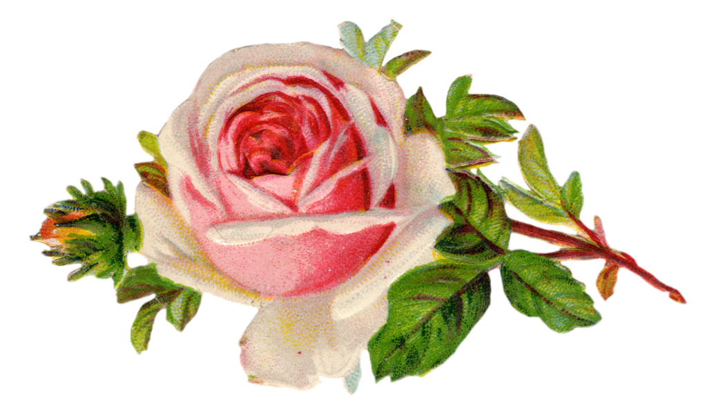 1024x601 Free Vintage Rose Clip Art Clip Art, Free Printables And Vintage