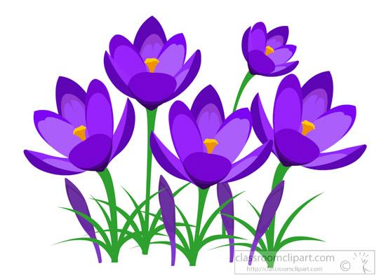 550x400 Flowers Clipart Perennial Purple Crocus Spring Flower Clipart