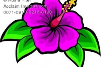 343x228 Hawaiian Flowers Pictures Clip Art