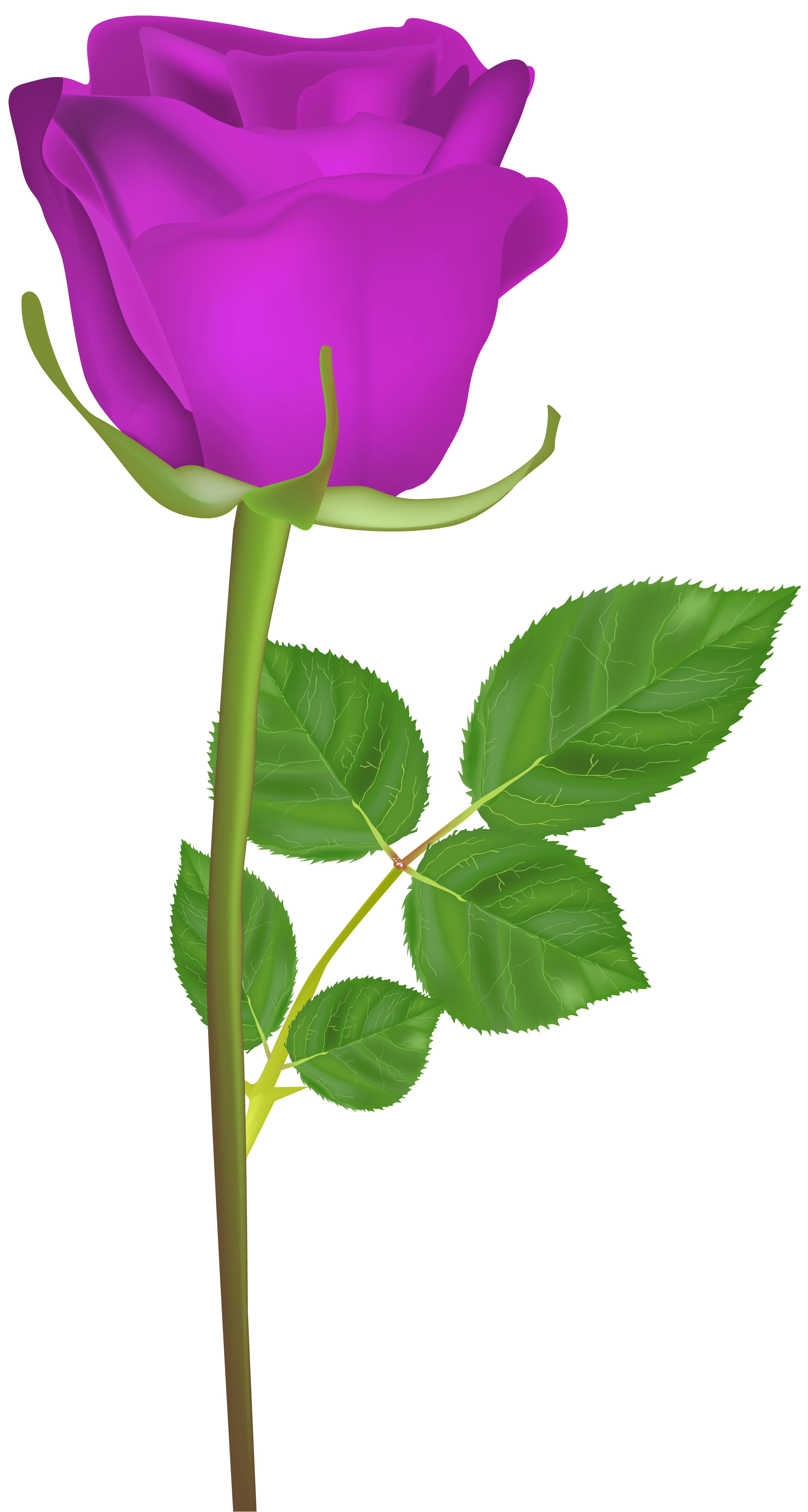 4276x8000 Rose With Stem Purple Png Clip Art Imageu200b Gallery Yopriceville