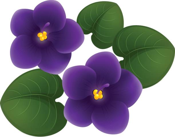 violet flower clipart at getdrawings com free for personal use rh getdrawings com violet crayon clipart violet flower clip art free