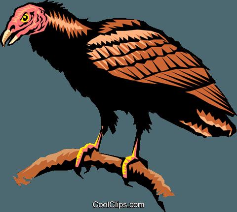 480x431 Turkey Vulture Royalty Free Vector Clip Art Illustration Anim0266