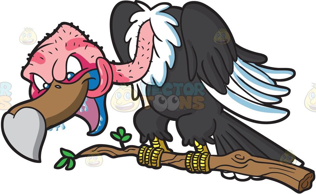 1024x628 A Vulture Salivating On A Prey Cartoon Clipart Vector Toons