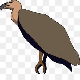 260x260 Beaky Buzzard Turkey Vulture Clip Art